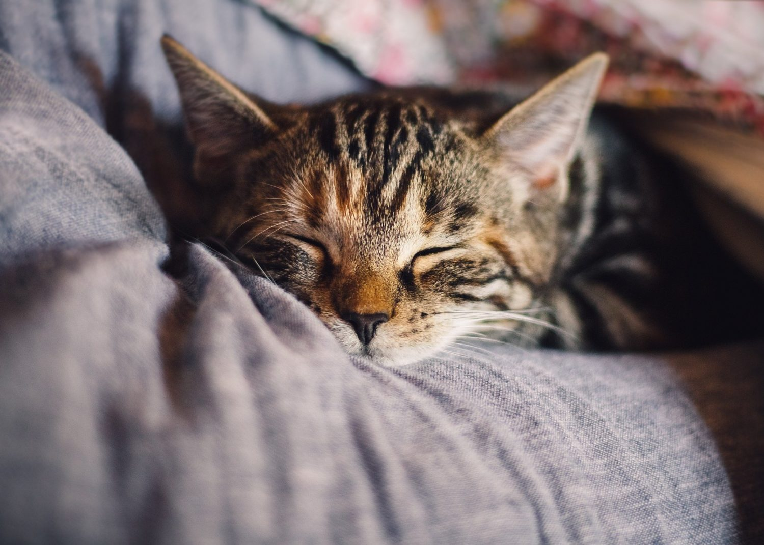 Read more about the article How to Sleep Better